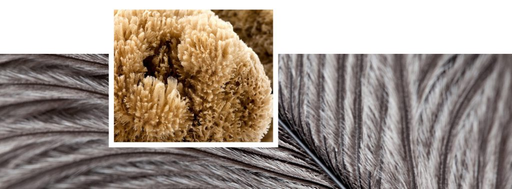 Ostrich feathers and marine sponges detail